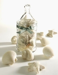 Seashell Soaps in Jar - Made by Gianna Rose